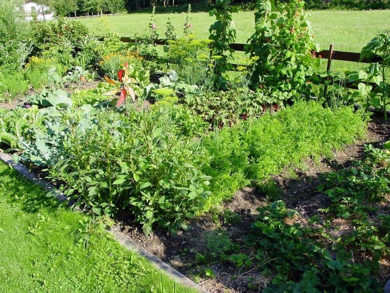 beginners-guide-to-starting-an-allotment-4-step-2-plan-your-plot-layout-pixabay