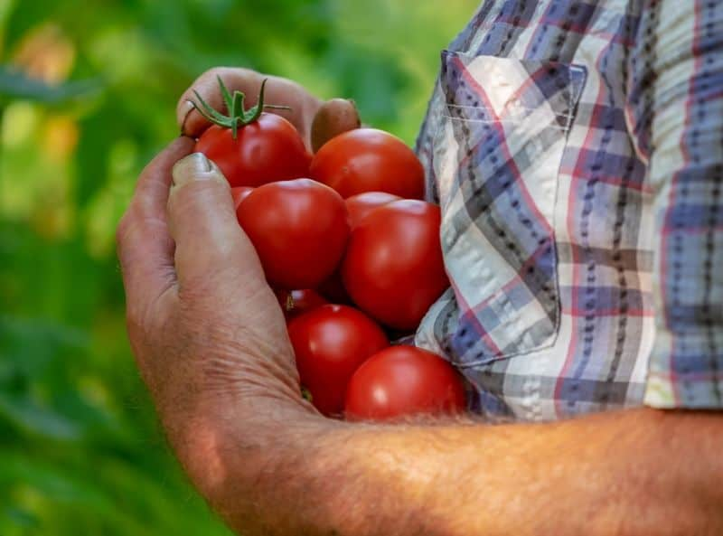 beginners-guide-to-starting-an-allotment-7-step-5-get-growing