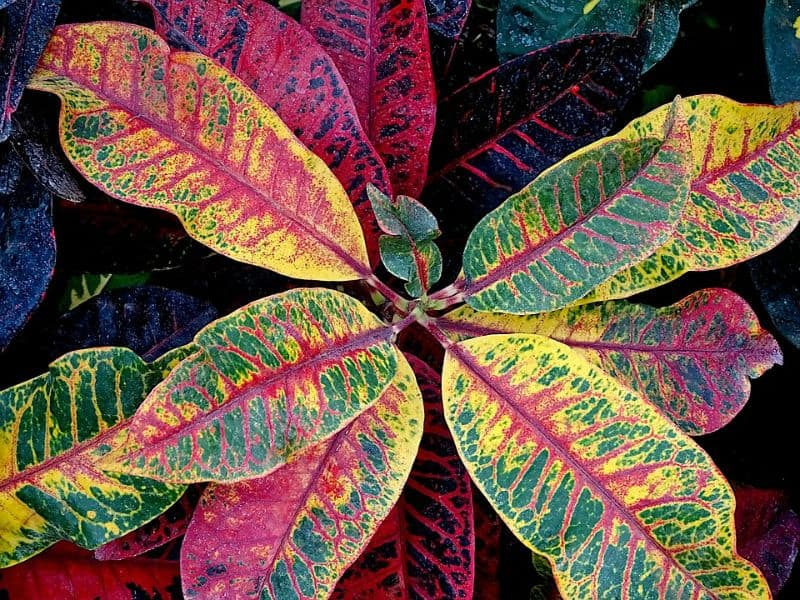 top-houseplant-trends-for-2020-1-indoor-plants-with-colourful-foliage-pixabay