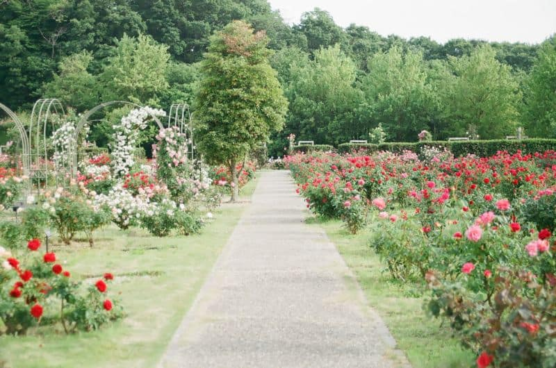 ways-to-build-sensory-garden-the-sense-of-sight-unsplash