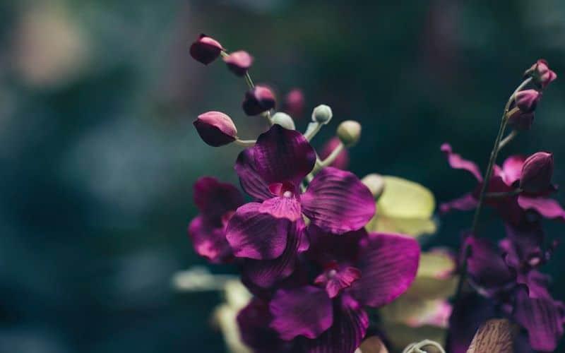 best-plants-for-anti-allergy-garden-2-double-flowered-hollyhocks-unsplash