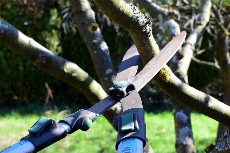 lockdown-basic-gardening-chores-3-trimming-and-pruning-pixabay