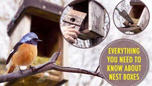 Ultimate Guide to Nest Boxes