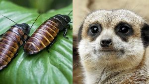 El Paso Zoo Let's You Name a Cockroach After Your Ex And Feeds Them To Meerkats